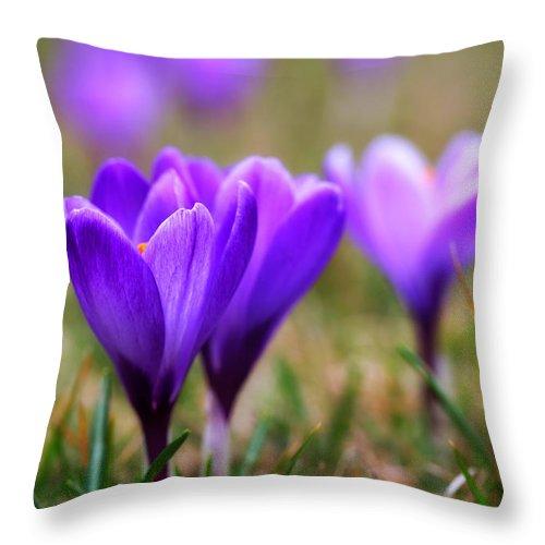 Flower Throw Pillow featuring the photograph Summer by Kent Mathiesen