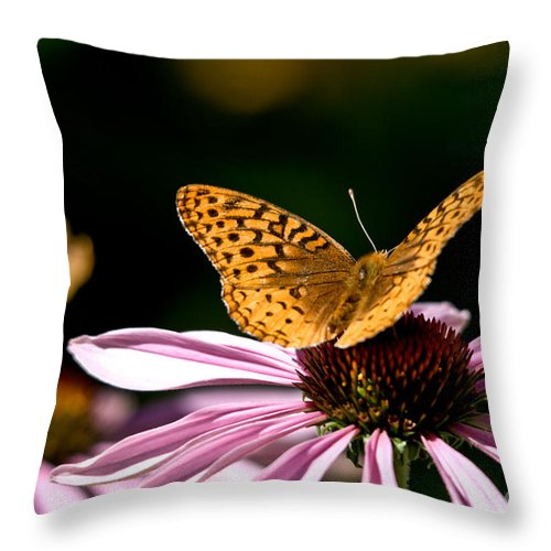 Butterfly Throw Pillow featuring the photograph Sunny Side Up by Cheryl Baxter
