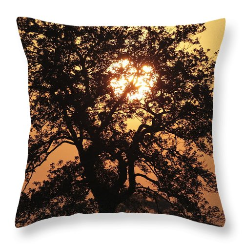 Forestry Gees Throw Pillow featuring the photograph Sunrise by Ronald Jansen