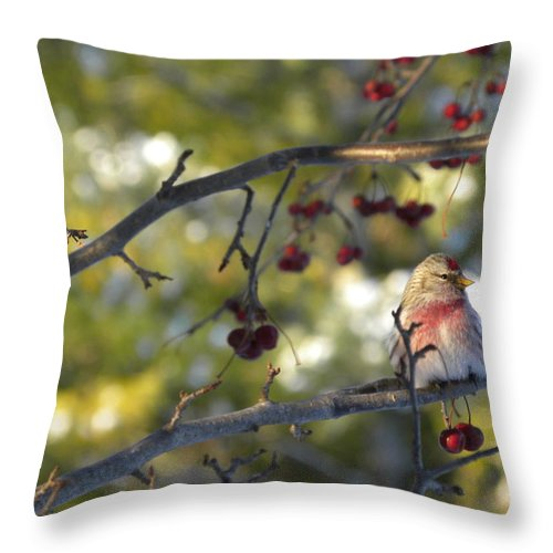 Canada Throw Pillow featuring the photograph Sunshine by Peggy McDonald