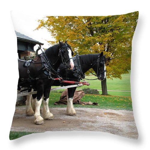 Horses Throw Pillow featuring the photograph Team Work by Barbara McDevitt