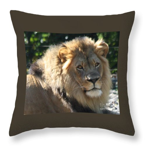 The King Of The Jungle Throw Pillow featuring the photograph The King Of The Jungle by John Telfer