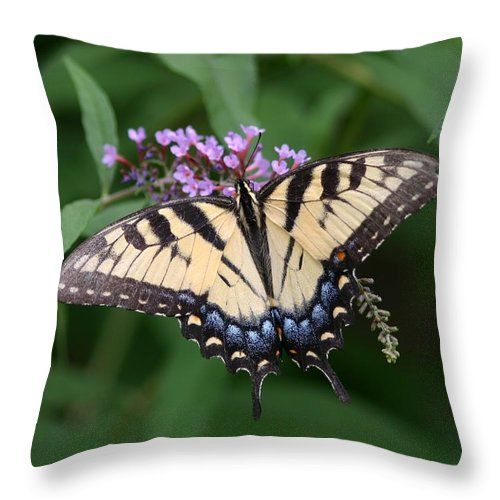 Butterfly Throw Pillow featuring the photograph Tiger Swallowtail On Butterfly Bush by Robert E Alter Reflections of Infinity