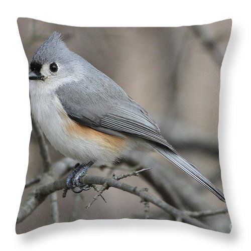 Grey Throw Pillow featuring the photograph Tufted Titmouse by Ken Keener