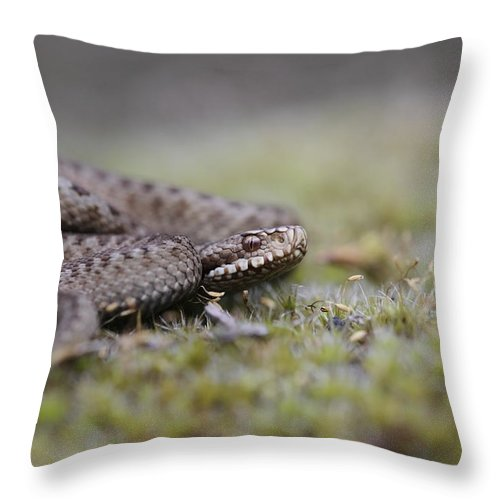Viper Throw Pillow featuring the photograph Viper by Ronald Jansen