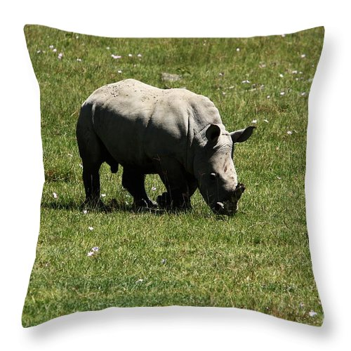 Rhinoceros Throw Pillow featuring the photograph White Rhinoceros Calf by Aidan Moran