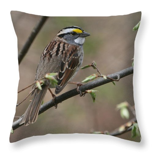 Sparrow Throw Pillow featuring the photograph White-throated Sparrow by Ken Keener