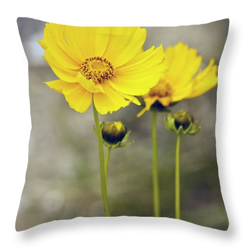 Yellow Flower Photographs Throw Pillow featuring the photograph Yellow Flowers by Dennis Coates