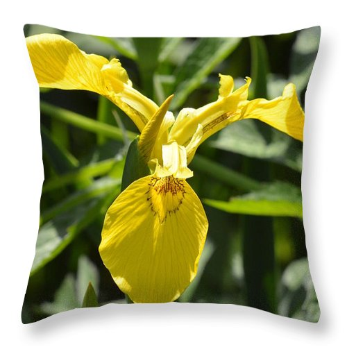 Yellow Throw Pillow featuring the photograph Yellow Water Iris by Nicki Bennett