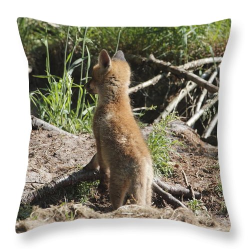 Fox Throw Pillow featuring the photograph Young Fox by Ronald Jansen