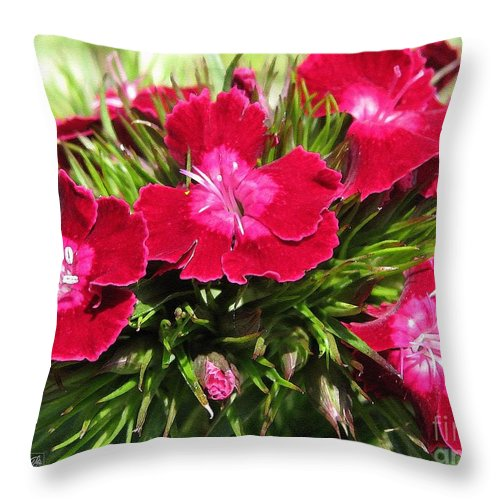 Mccombie Throw Pillow featuring the painting Sweet William From The Super Duplex Bluepoint Mix by J McCombie