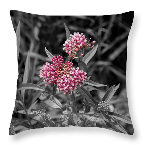 South Dakota Throw Pillow featuring the photograph 21687 by M Dale