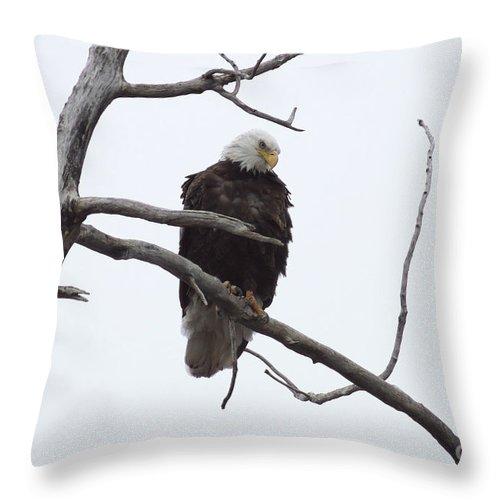Eagle Throw Pillow featuring the photograph Bald Eagle by Lori Tordsen