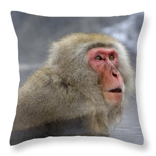 Japanese Macaque Throw Pillow featuring the photograph Japanese Macaque by John Shaw