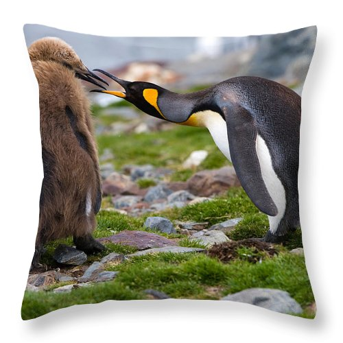 Animal Throw Pillow featuring the photograph King Penguin by John Shaw