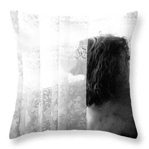 English Springer Spaniel Throw Pillow featuring the photograph 3 30 by Angie Rea