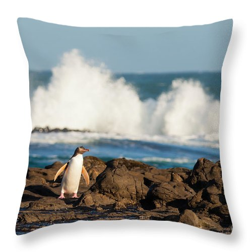 South Island Throw Pillow featuring the photograph Adult Nz Yellow-eyed Penguin Or Hoiho On Shore by Stephan Pietzko