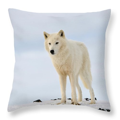 Canis Lupus Arctos Throw Pillow featuring the photograph Arctic Wolf by John Shaw