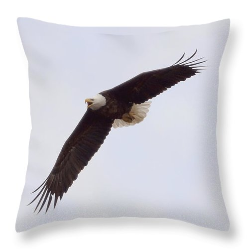 Eagle Throw Pillow featuring the photograph Bald Eagle Soaring by Lori Tordsen