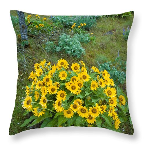 Balsamroot Throw Pillow featuring the photograph Balsamroot by John Shaw