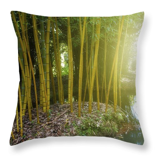 Forest Throw Pillow featuring the photograph Bamboo by Les Cunliffe