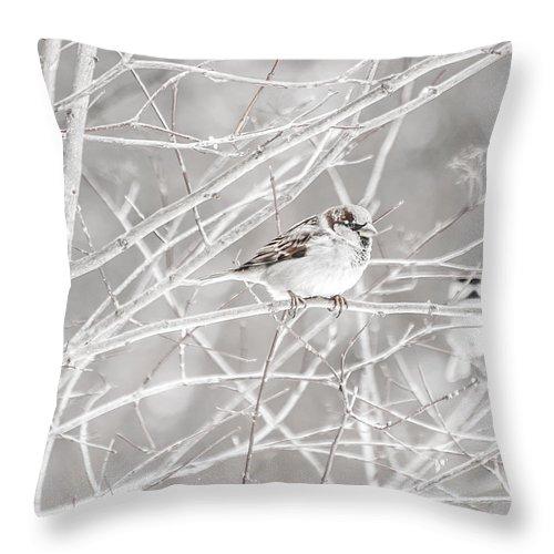 Bird Throw Pillow featuring the photograph Bird by Amel Dizdarevic