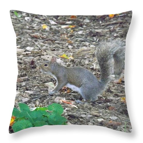 Rodent Throw Pillow featuring the photograph Blending In by Sara Raber
