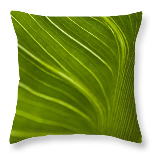 Beauty Throw Pillow featuring the photograph Calla Lily Stem Close Up by Jim Corwin