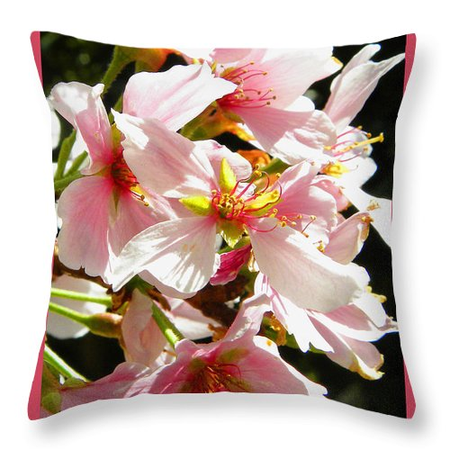 Cherry Blossoms Throw Pillow featuring the photograph Cherry Blossoms by Sandi OReilly