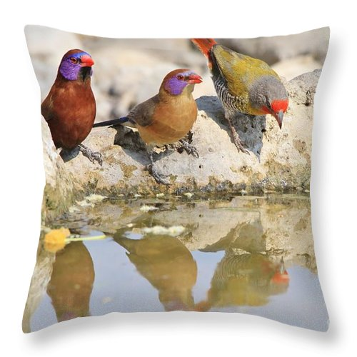 Africa Throw Pillow featuring the photograph Colorful Birds From Africa by Hermanus A Alberts