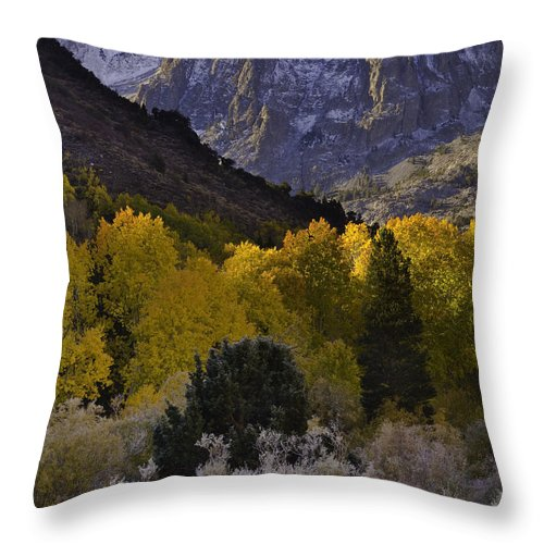 Eastern Sierra Throw Pillow featuring the photograph Eastern Sierras In Autumn by John Shaw