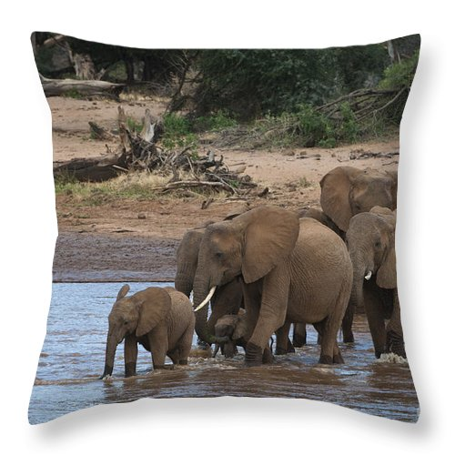 Africa Throw Pillow featuring the photograph Elephants Crossing The River by John Shaw