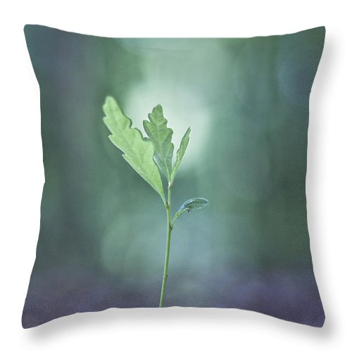 Oak Throw Pillow featuring the photograph Embracing The Light by Maria Ismanah Schulze-Vorberg