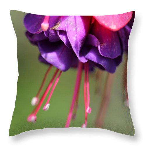 Mccombie Throw Pillow featuring the photograph Fuchsia Named Dark Eyes by J McCombie