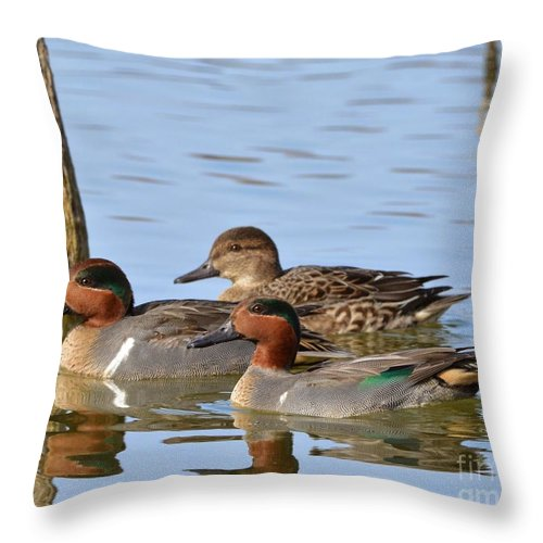 Mallard Throw Pillow featuring the photograph Green Winged Teal by Kevin Pugh