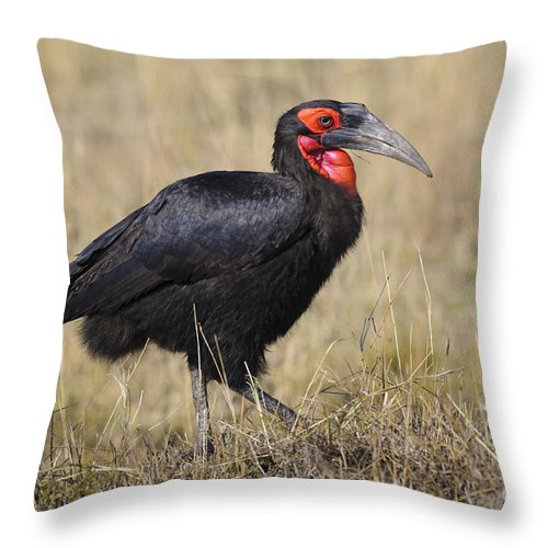 Africa Throw Pillow featuring the photograph Ground Hornbill by John Shaw