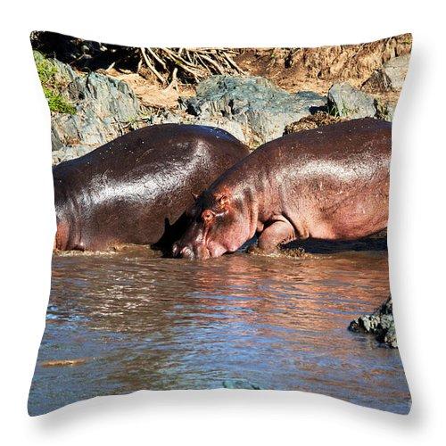 Hippo Throw Pillow featuring the photograph Hippopotamus In River. Serengeti. Tanzania by Michal Bednarek