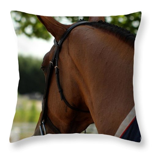 Equestrian Throw Pillow featuring the photograph Hunter2 by Janice Byer