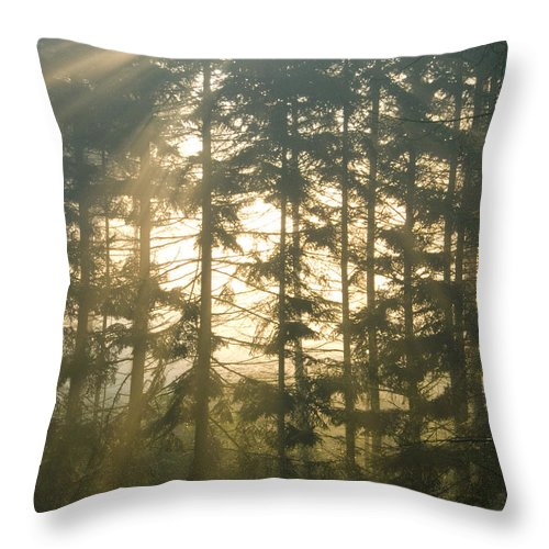 Nature Throw Pillow featuring the photograph Light In The Forest by Daniel Csoka