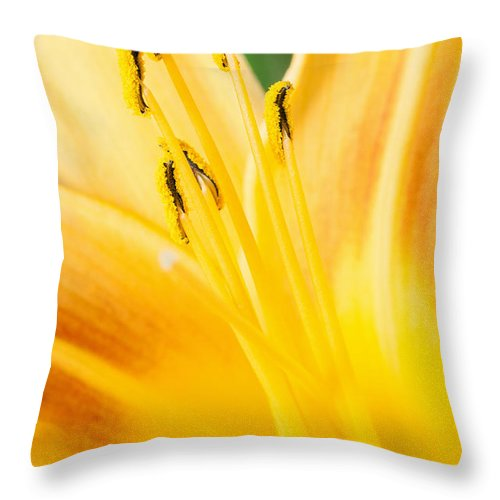 Lily Throw Pillow featuring the photograph Lily by Daniel Csoka