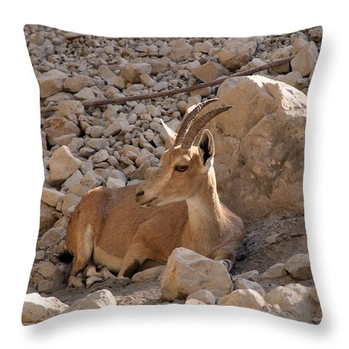 Nubian Ibex Throw Pillow featuring the photograph Nubian Ibex by Doc Braham
