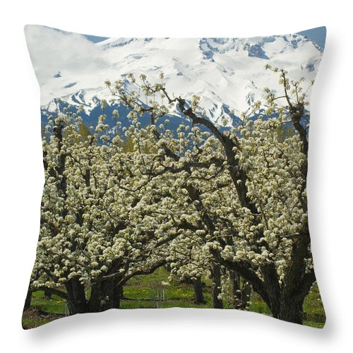 Orchard Throw Pillow featuring the photograph Orchard And Mount Hood, Oregon by John Shaw