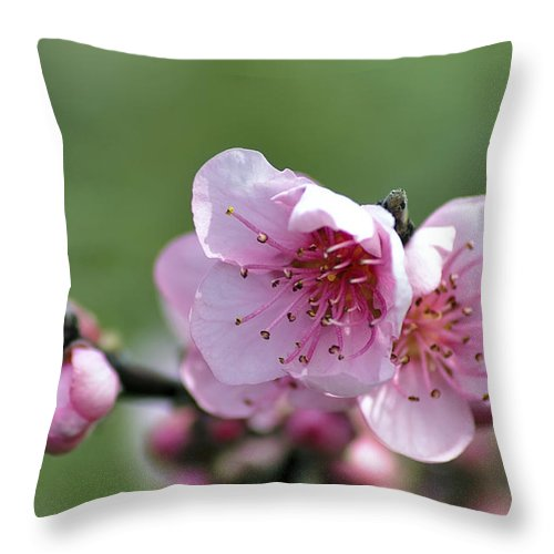 Winter Throw Pillow featuring the photograph Pink Blossom by Paulo Goncalves