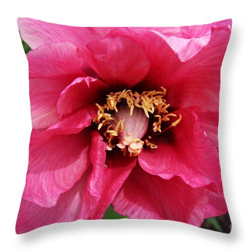 Peonies Throw Pillow featuring the photograph Pink Peony by Christiane Schulze Art And Photography