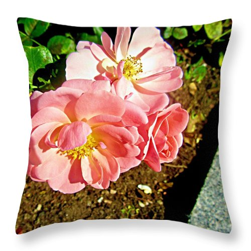 Roses Throw Pillow featuring the photograph Pink Roses by Stephanie Moore