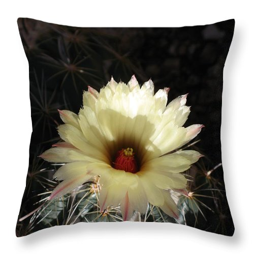 Cactus Throw Pillow featuring the photograph Pure Beauty by Christiane Schulze Art And Photography