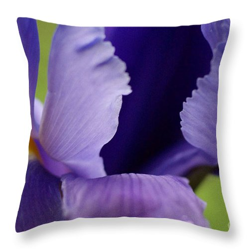 Purple Throw Pillow featuring the photograph Purple by Carol Lynch