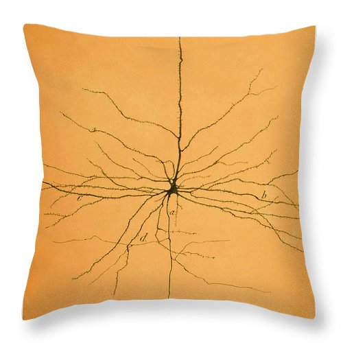 Pyramidal Cell Throw Pillow featuring the photograph Pyramidal Cell In Cerebral Cortex, Cajal by Science Source
