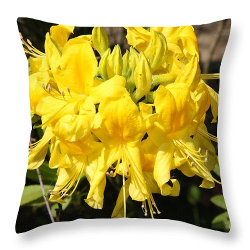 Azalea Throw Pillow featuring the photograph Radiant Yellow by Christiane Schulze Art And Photography