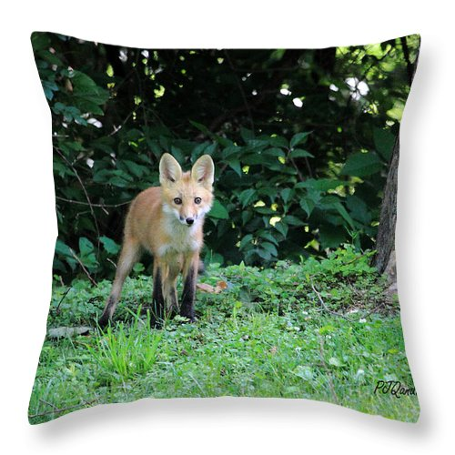 Red Fox Kit Throw Pillow featuring the photograph Red Fox Kit by PJQandFriends Photography
